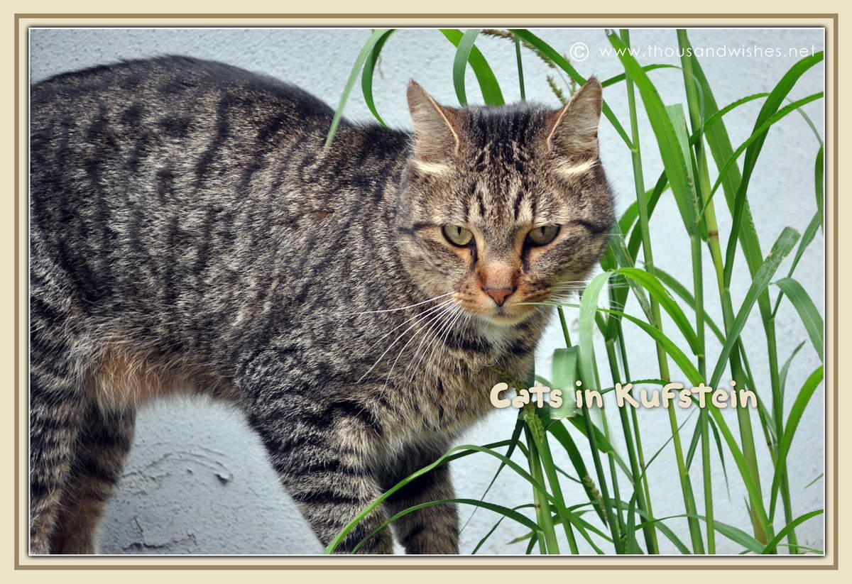 01_cats_kuftsein