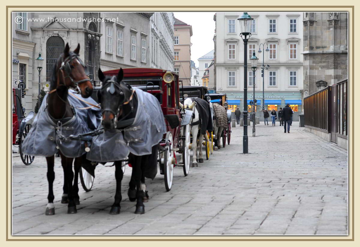 03_vienna_horses_near_St_Stephens_Cathedral