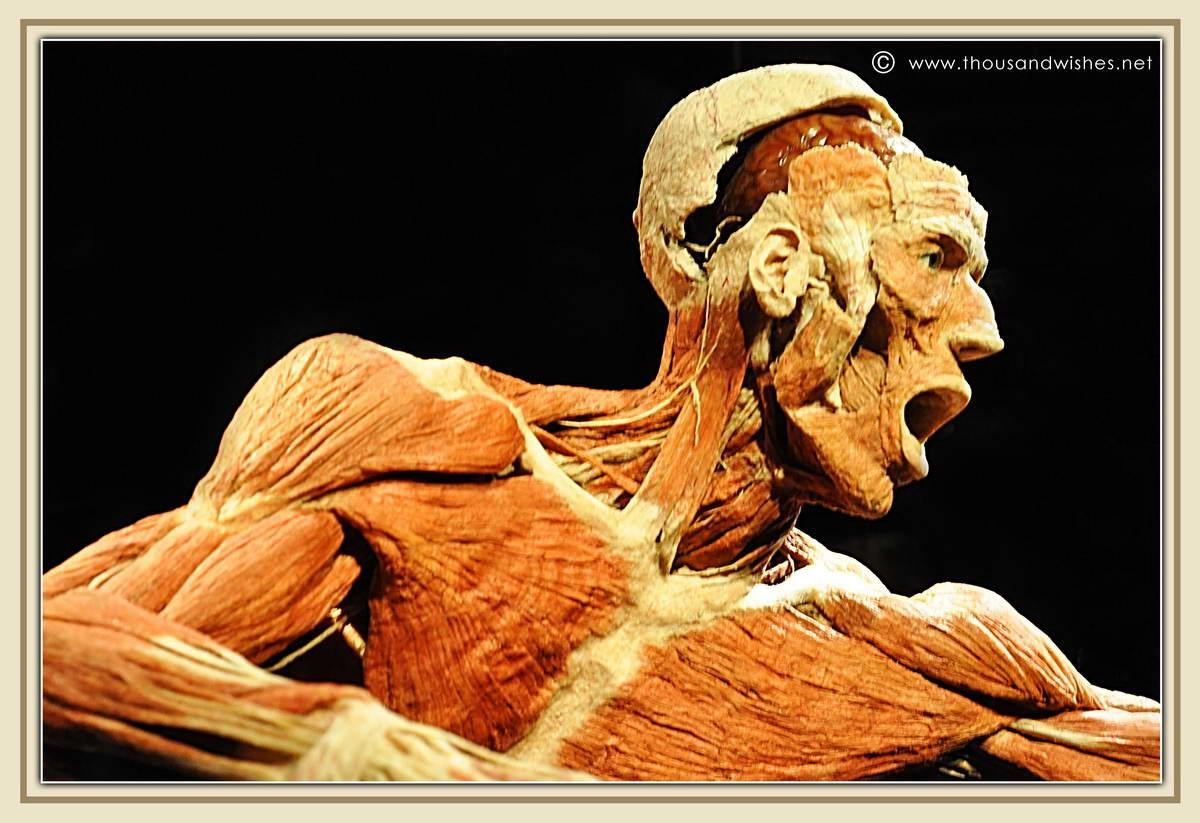 38_Naturhistorisches_Museum_Vienna_Gunther_Von_Hagens