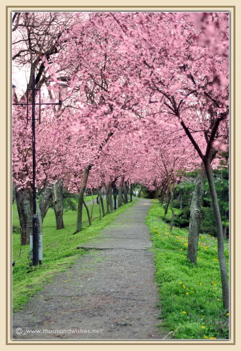 05_spring_timisoara