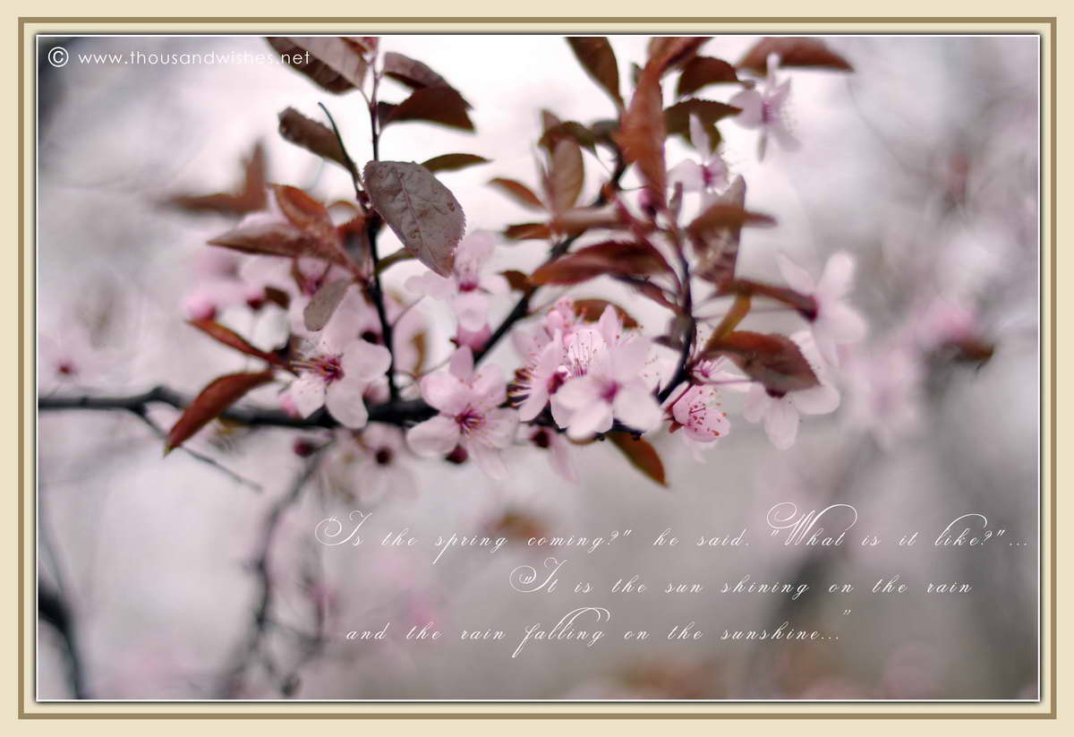 06_spring_timisoara