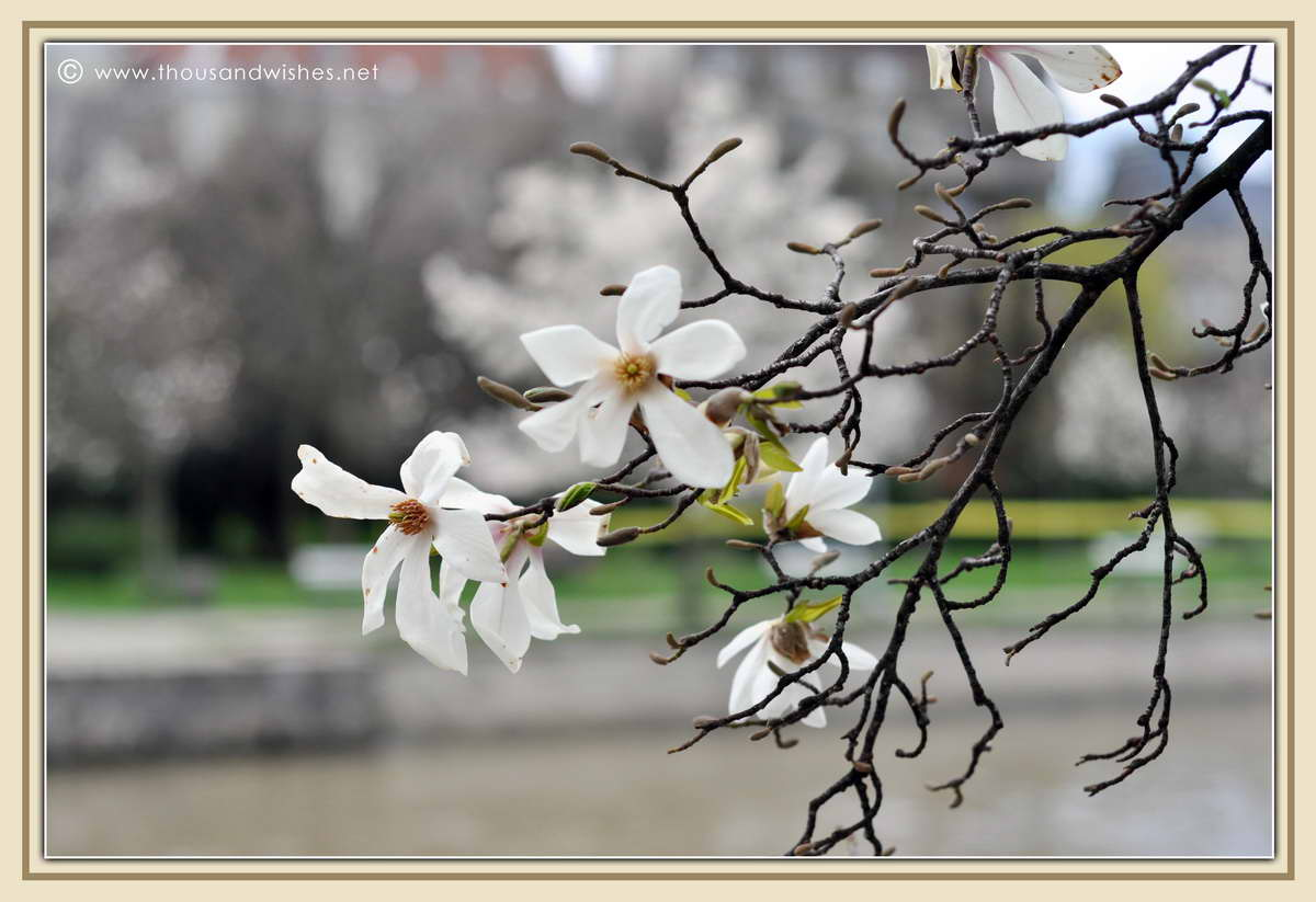 11_spring_timisoara