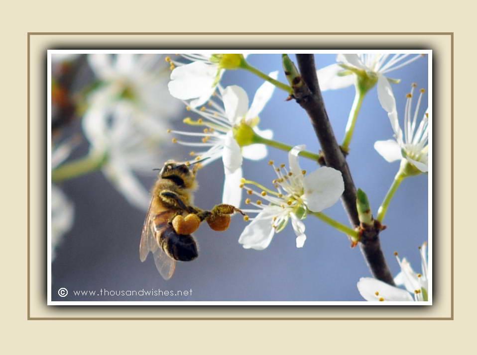 18_bee_nectar