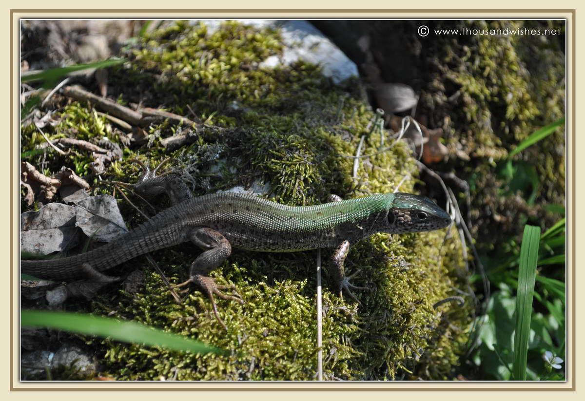 06_cazanele_mari_romania_reptile