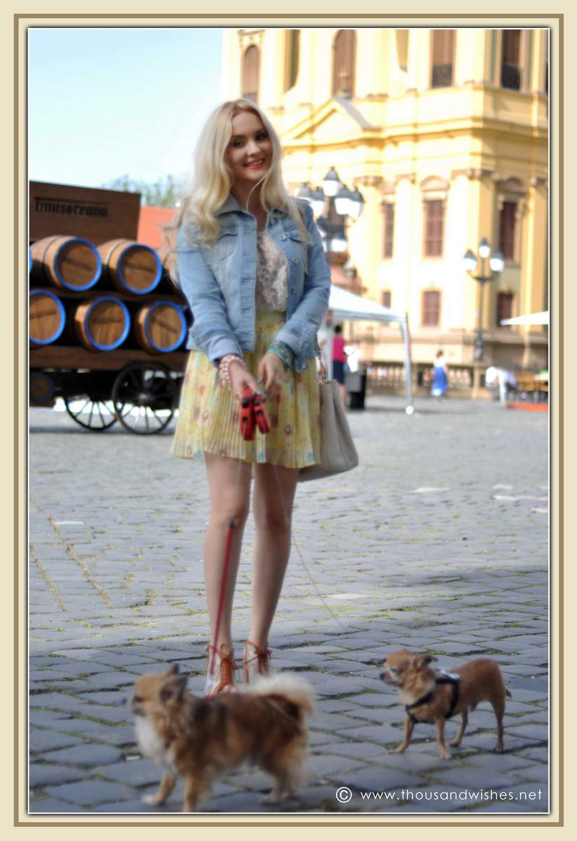 07_chihuahua_floral_skirt_jeans_jacket