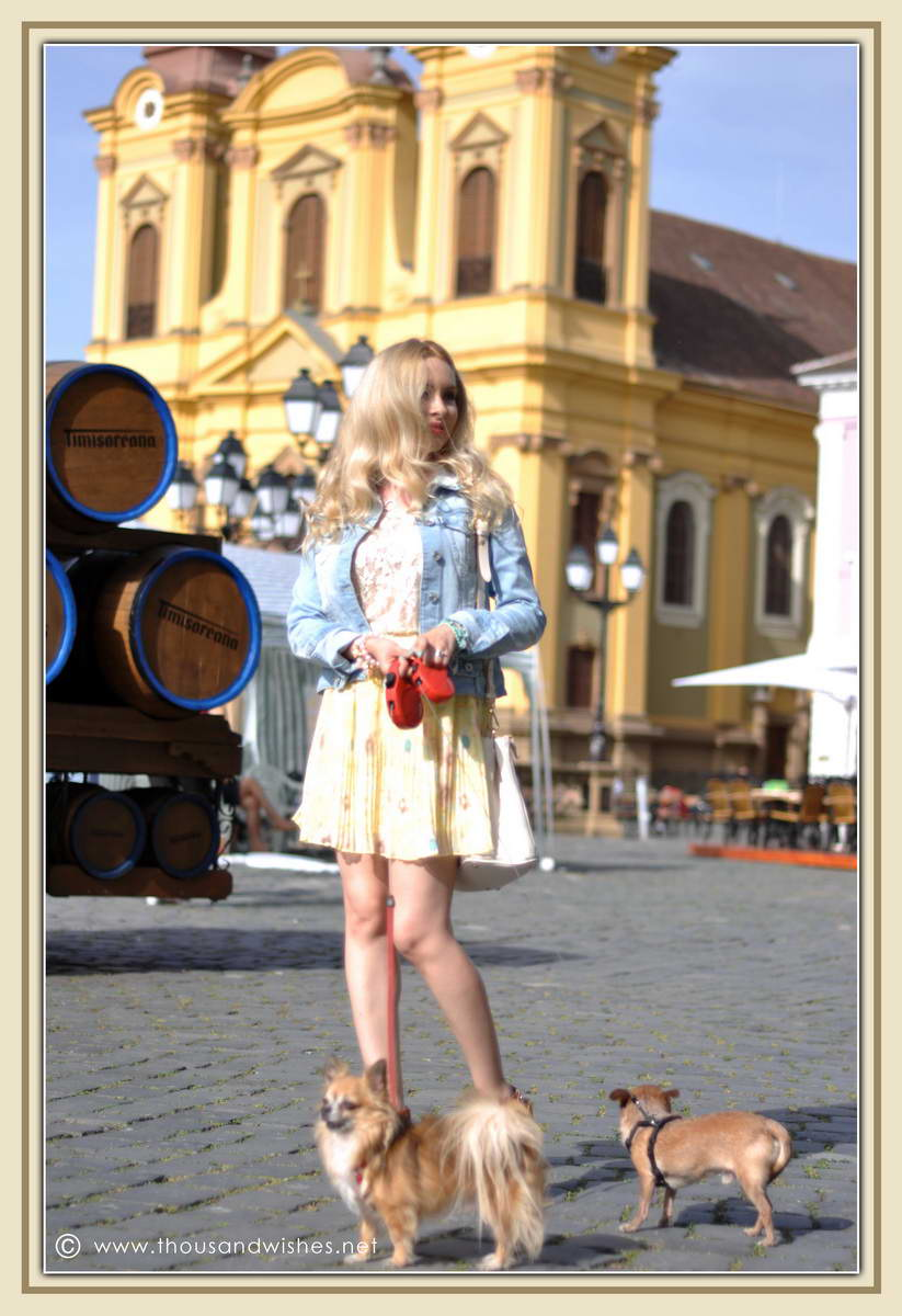 08_chihuahua_floral_skirt_jeans_jacket_timisoara