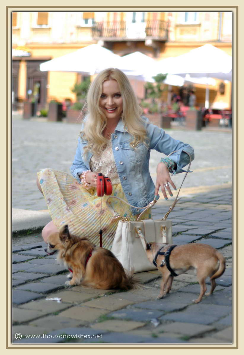 09_chihuahua_floral_skirt_jeans_jacket