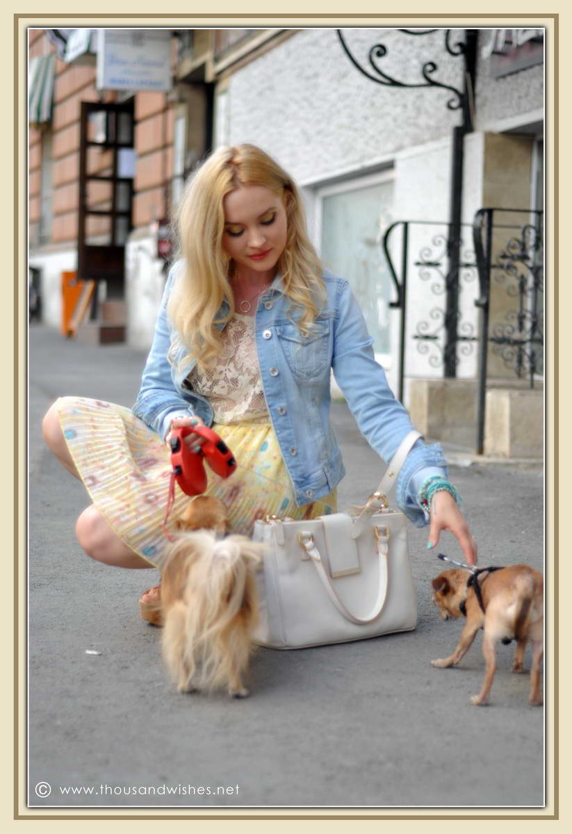 10_chihuahua_floral_skirt_jeans_jacket