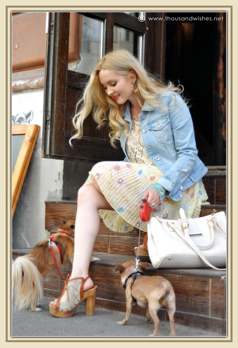 11_chihuahua_floral_skirt_jeans_jacket