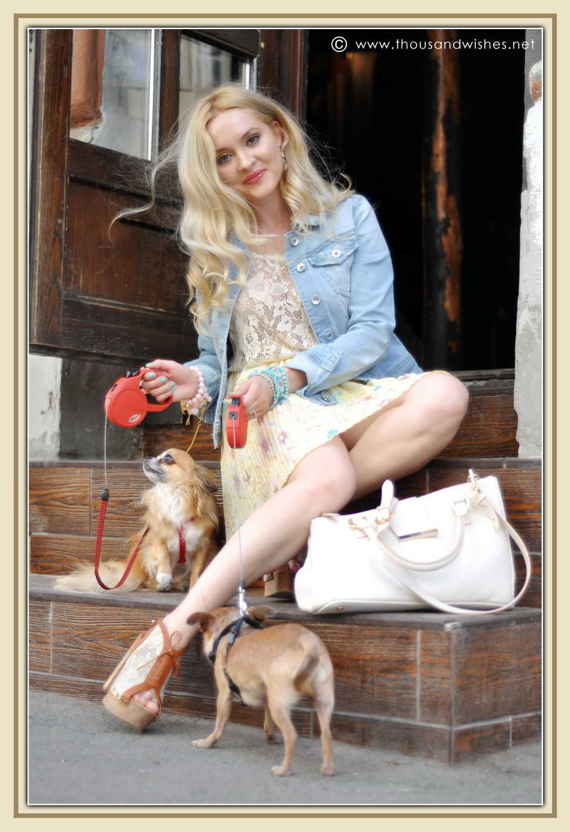 12_chihuahua_floral_skirt_jeans_jacket