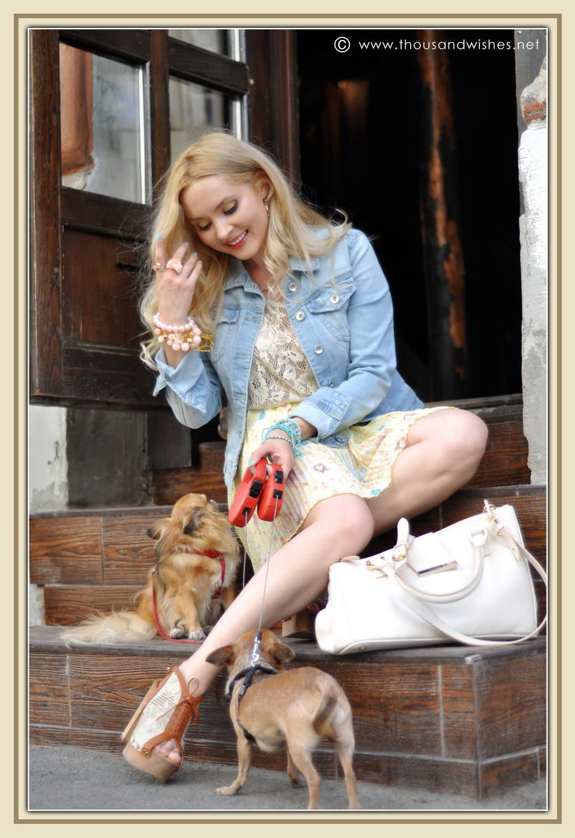 13_chihuahua_floral_skirt_jeans_jacket
