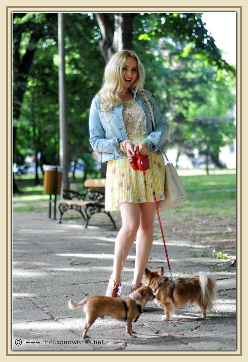 19_chihuahua_floral_skirt_jeans_jacket