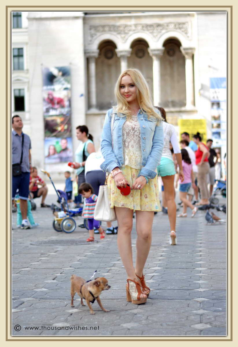 20_chihuahua_floral_skirt_jeans_jacket