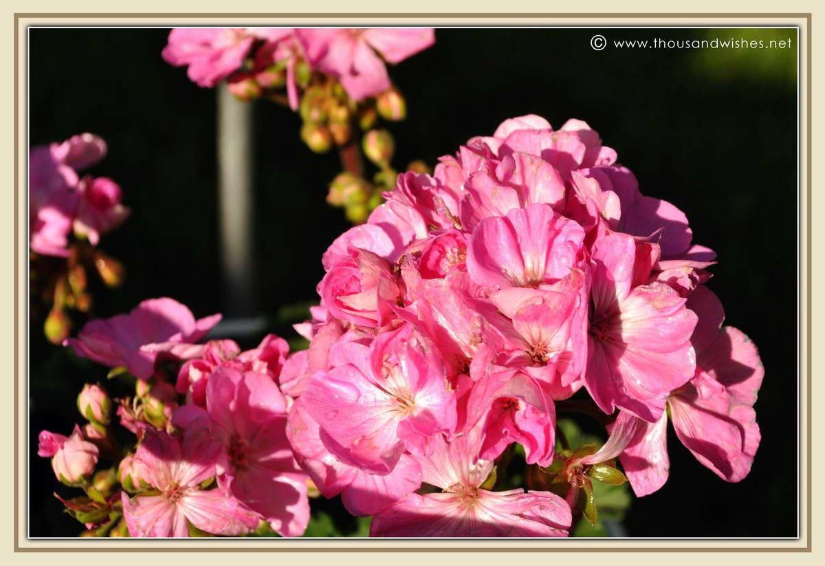 23_garden_flowers