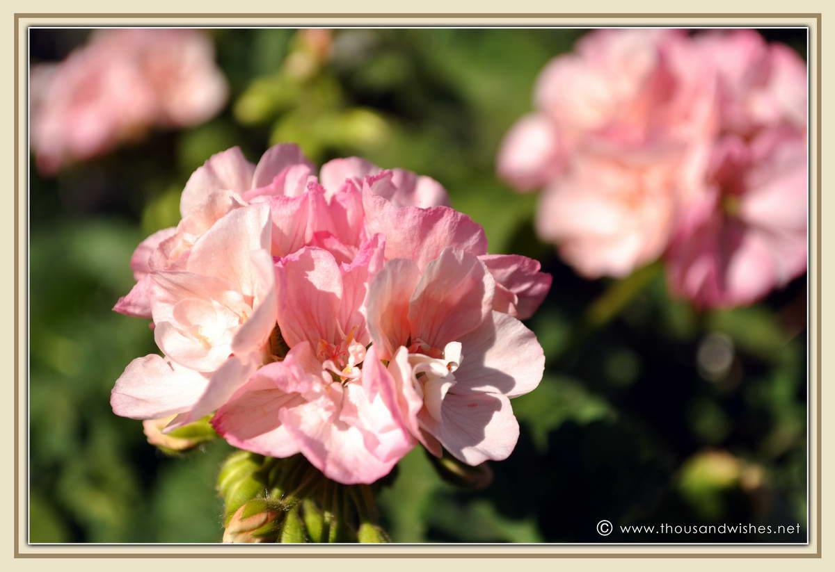 24_garden_flowers