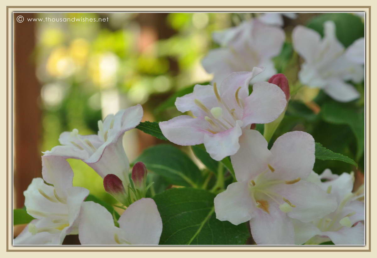 25_garden_flowers