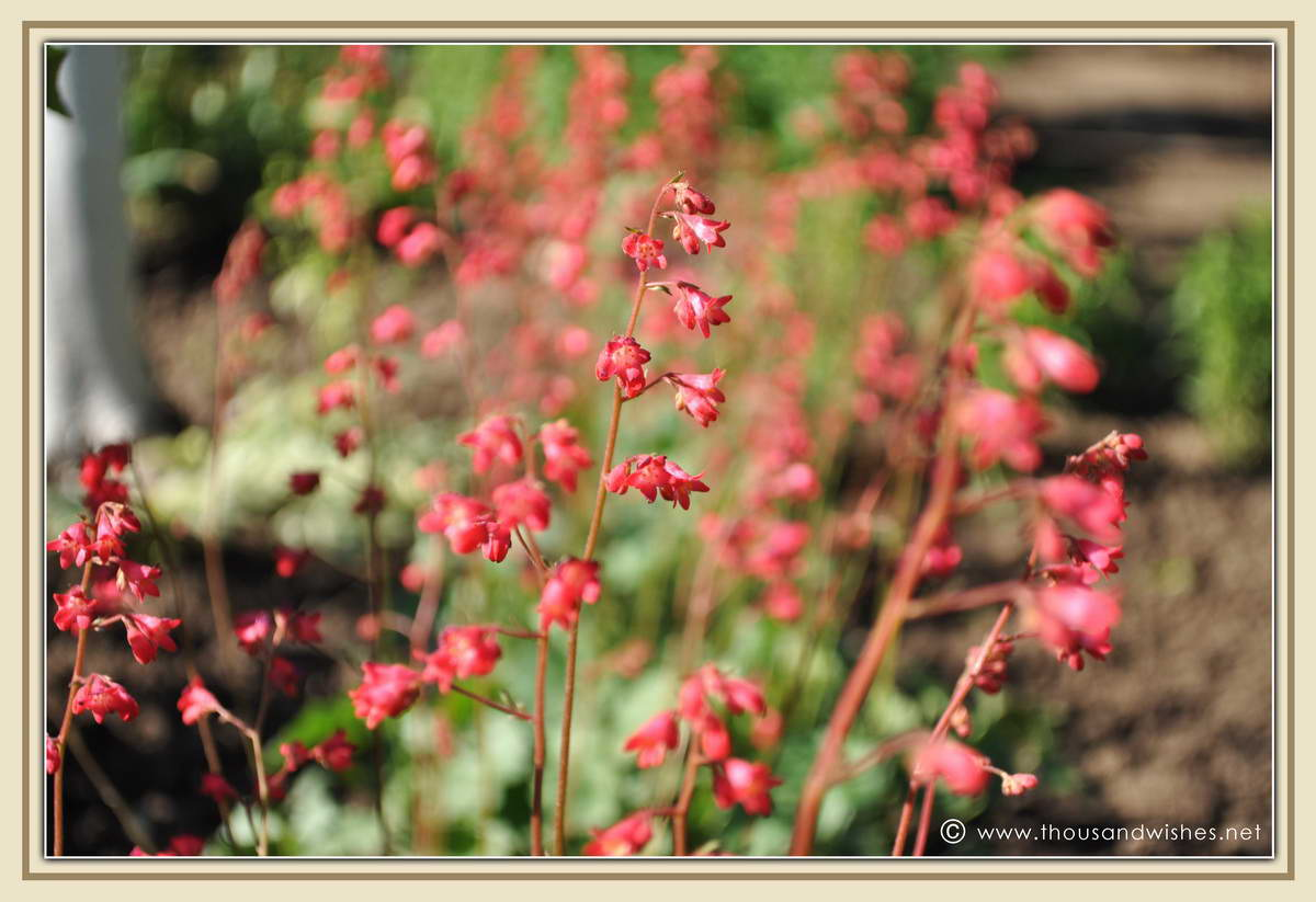 27_garden_flowers