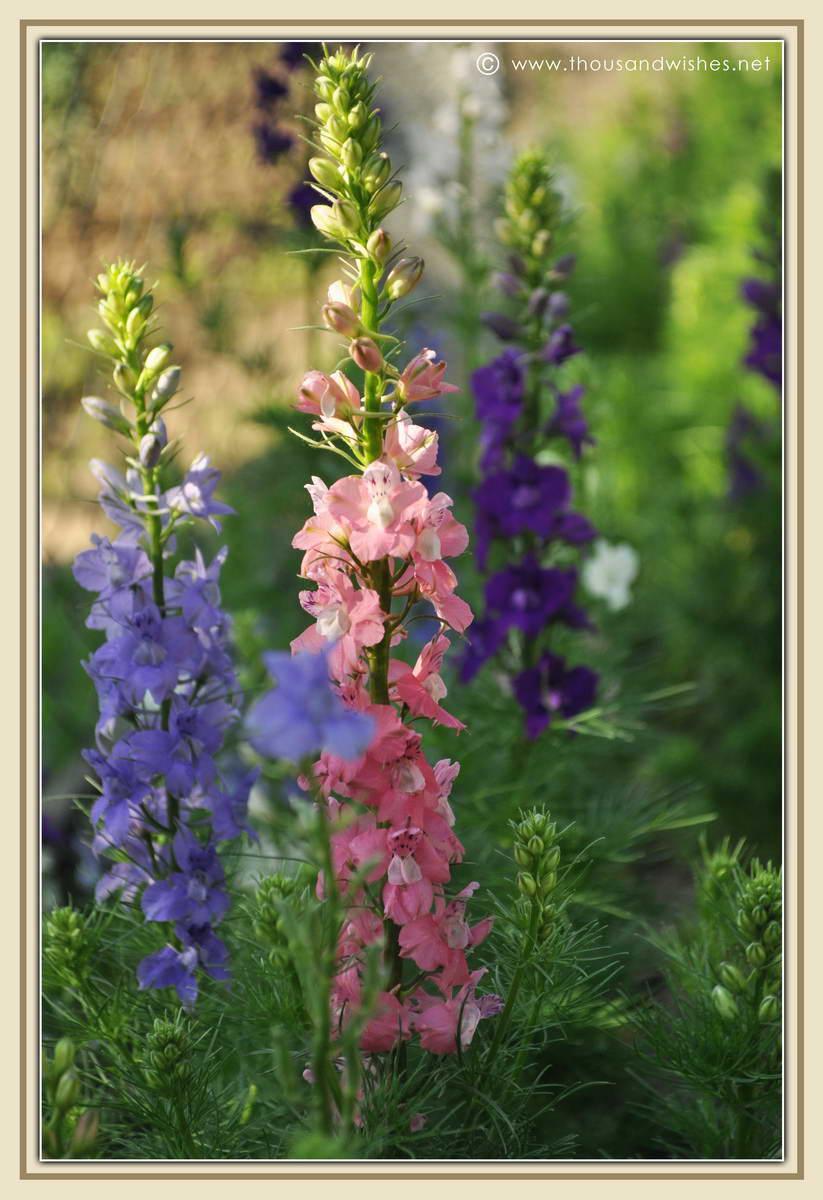 29_garden_flowers