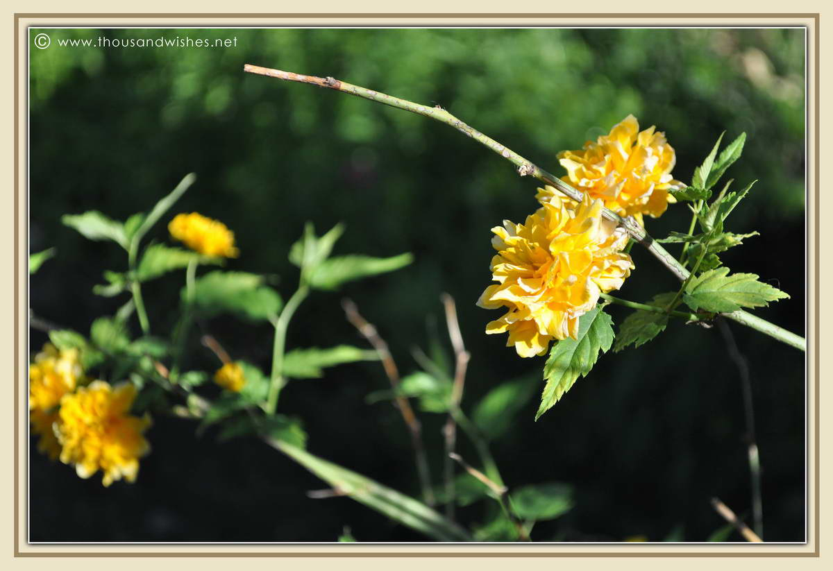 30_garden_flowers