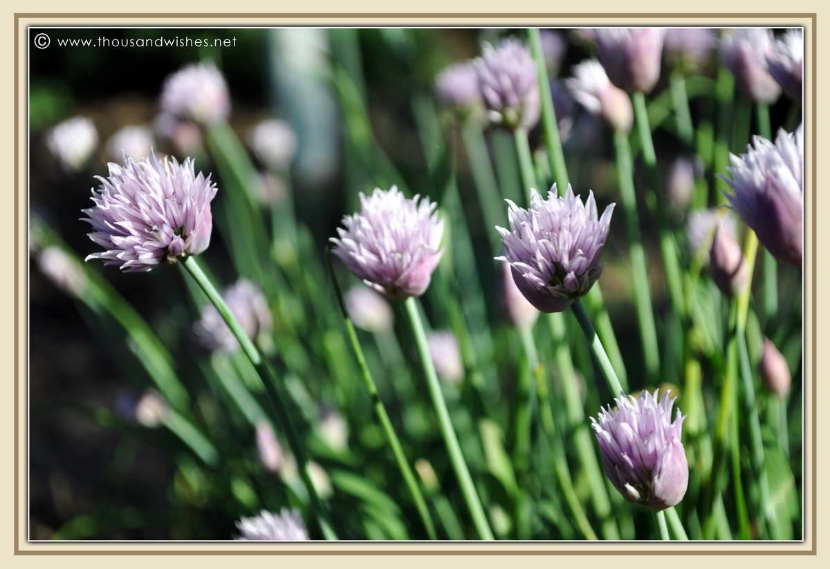 31_flowers_garden