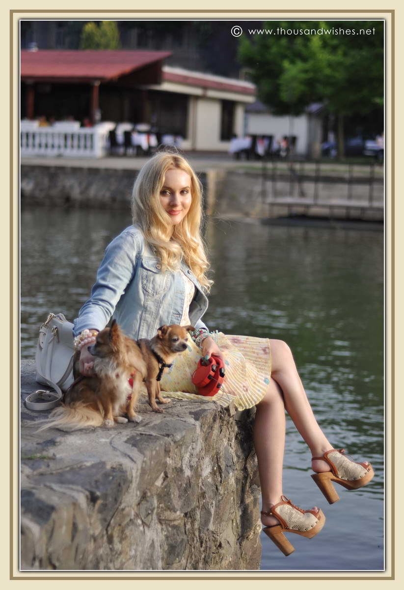 33_chihuahua_floral_skirt_jeans_jacket