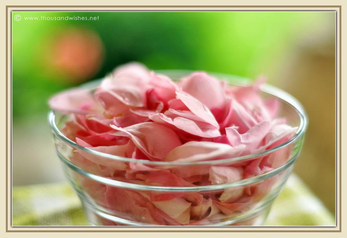 05_pink_roses_petals