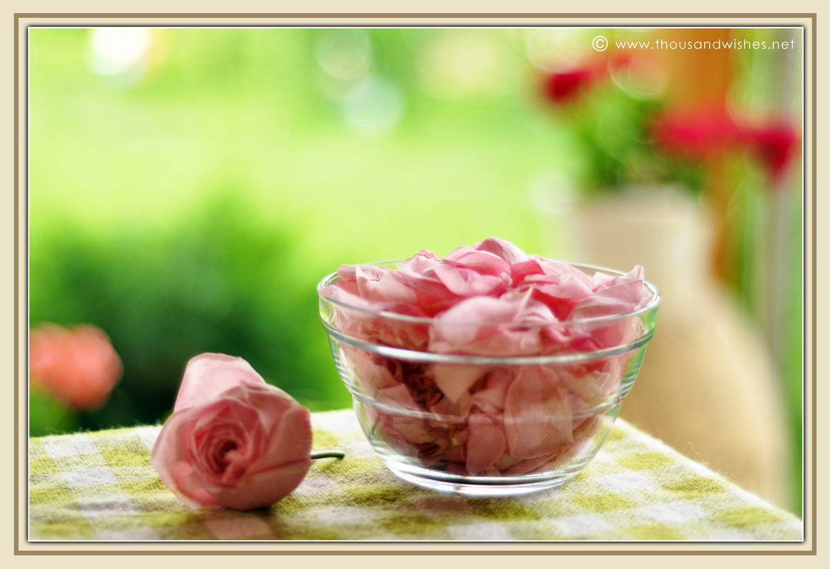 06_pink_roses_petals