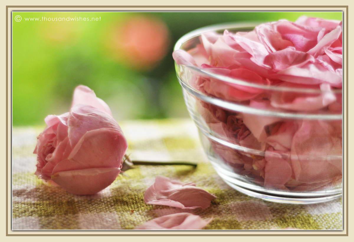 07_pink_roses_petals