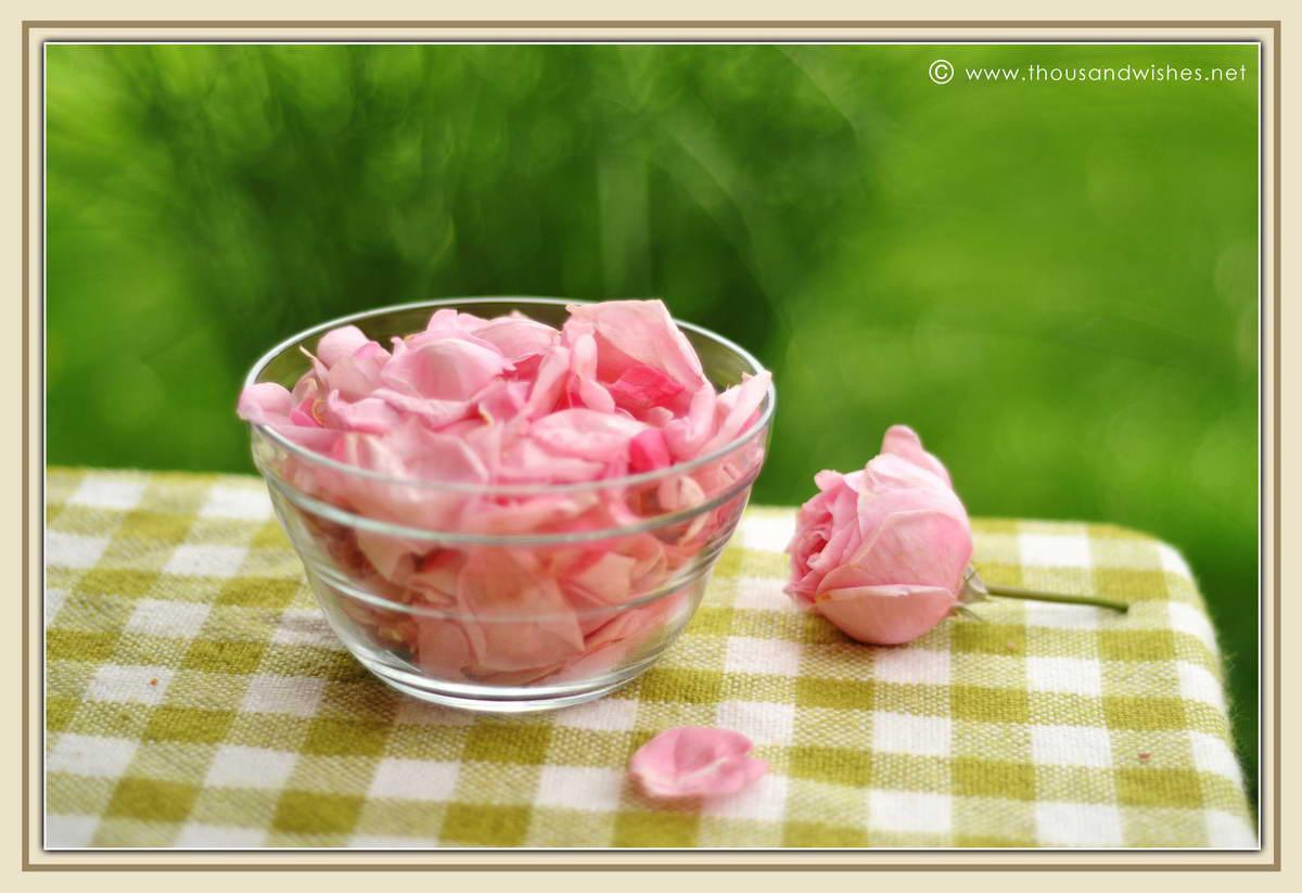 08_pink_roses_petals