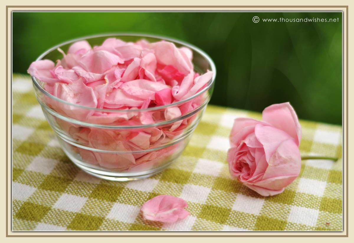09_pink_roses_petals