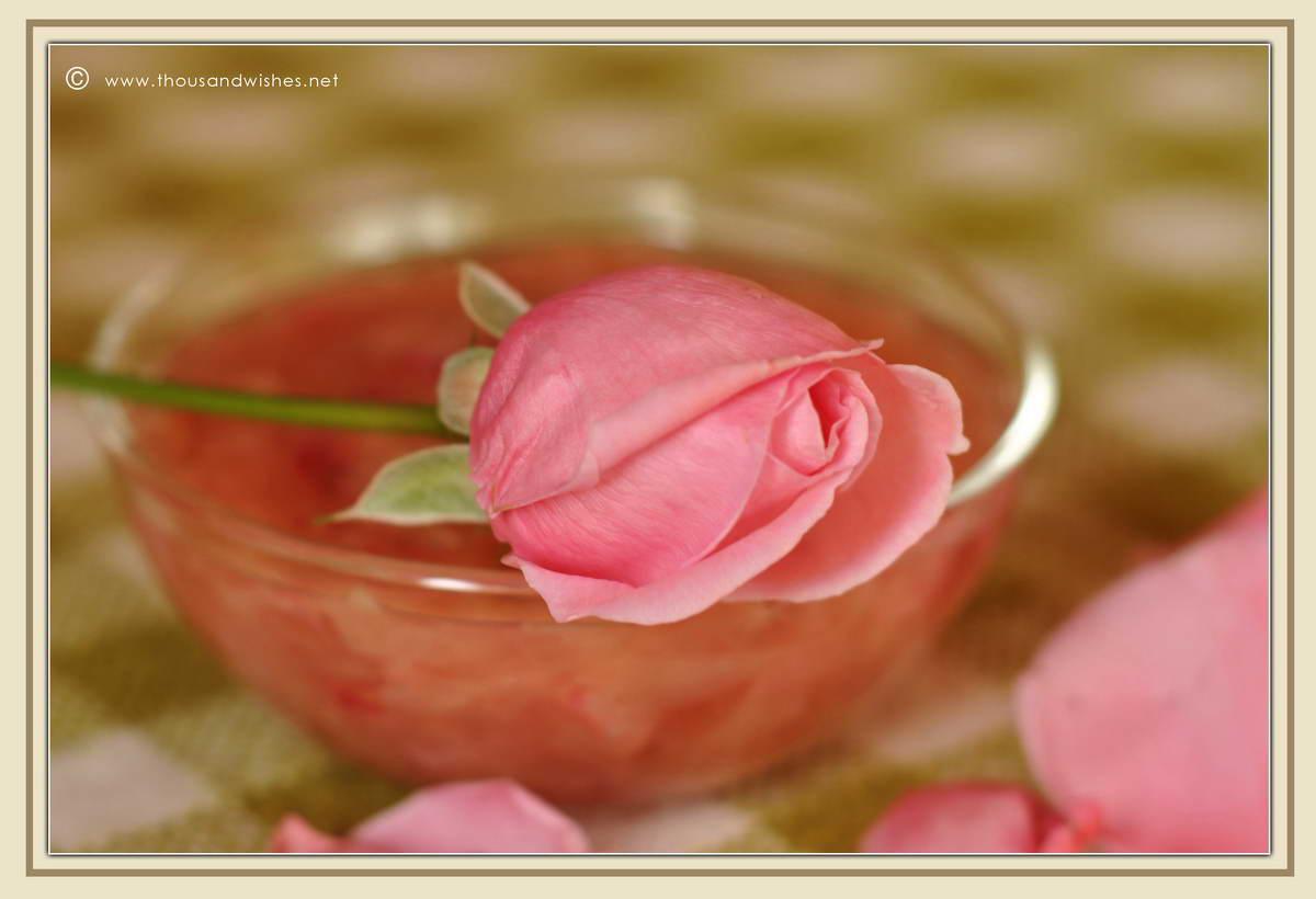 12_pink_roses_petal_jam