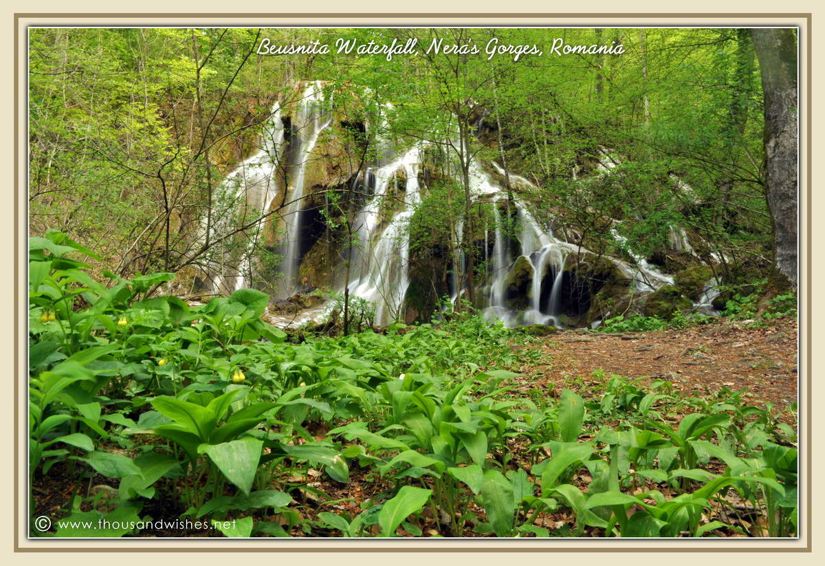 19_beusnita_waterfall_wild_garlic_nera_gorges