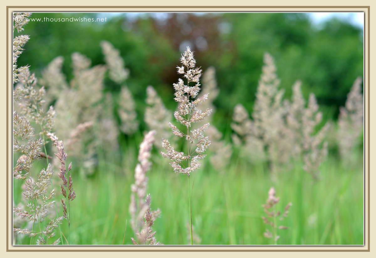 05_summer_field