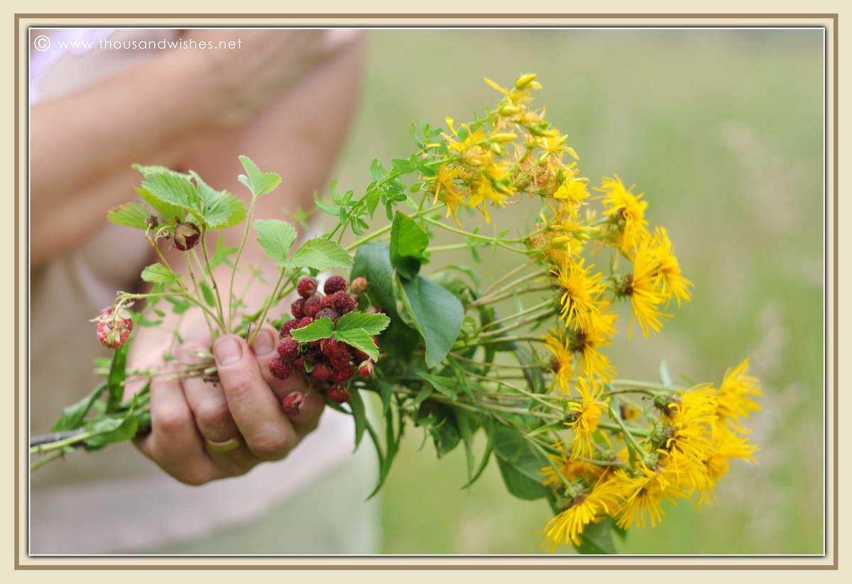 06_wild_strawberries_summer_flowers_bouquet