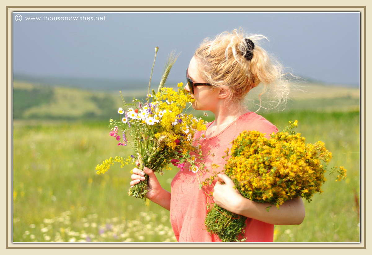 09_summer_bouquet_St_John's_wort_Lady's_Bedstraw_flowers