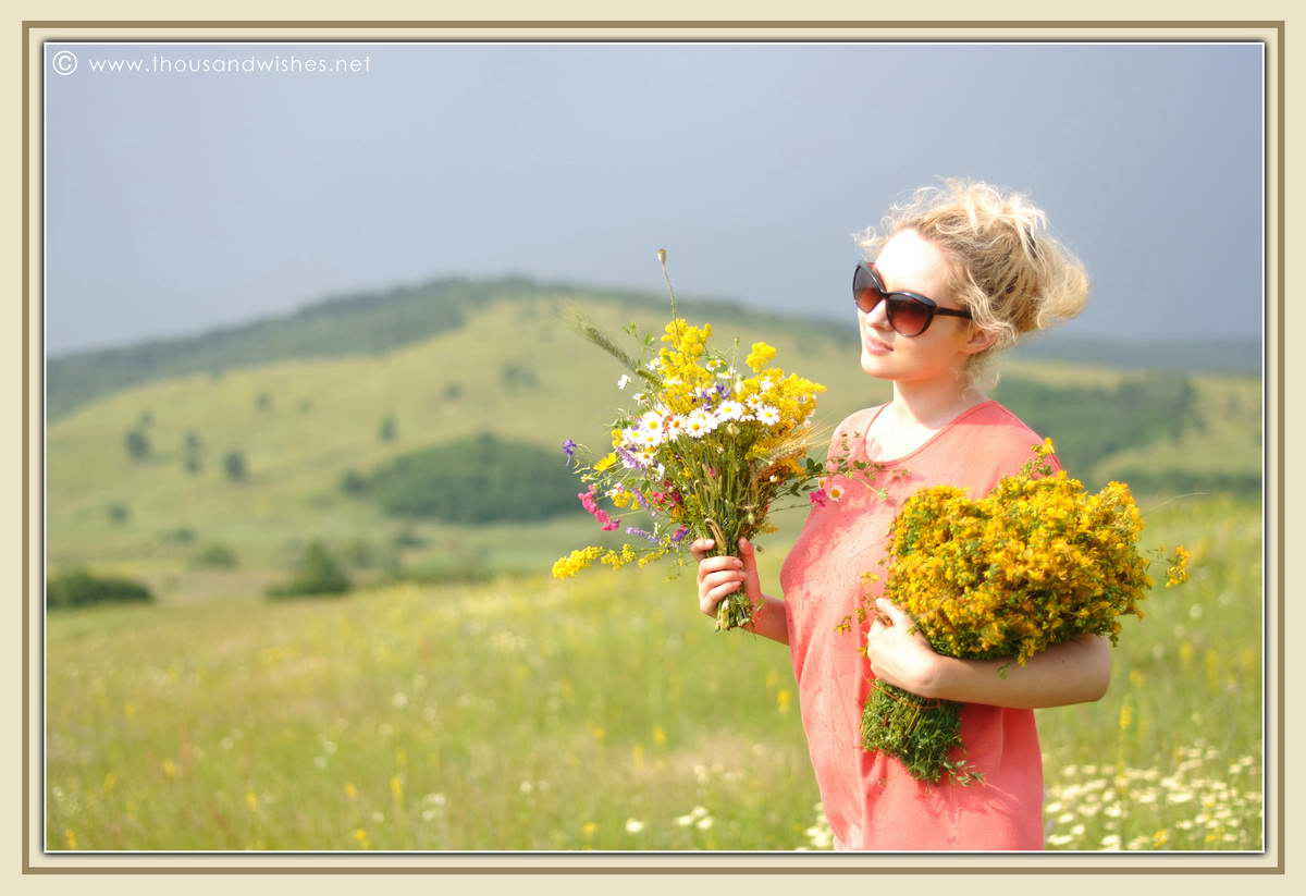 10_summer_bouquet_St_John's_wort_goldenrod