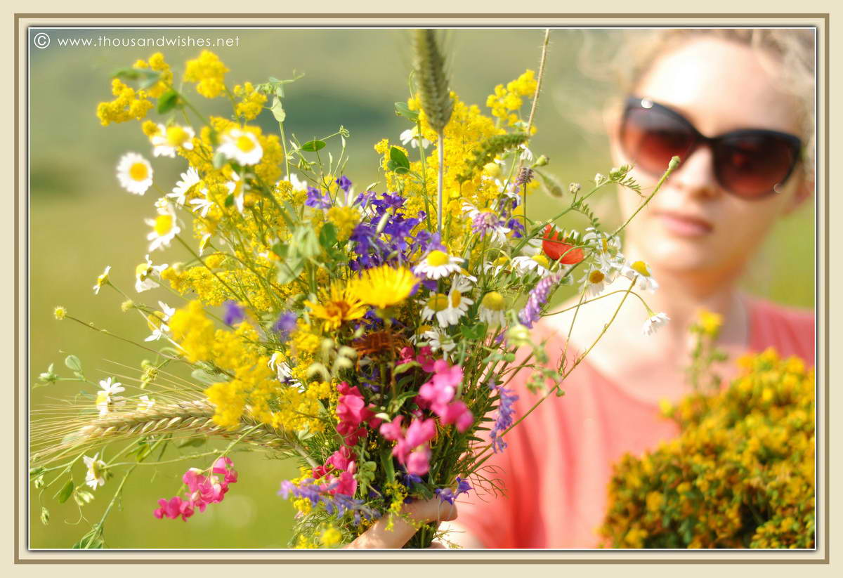 11_summer_bouquet_St_John's_wort_Lady's_Bedstraw_flowers