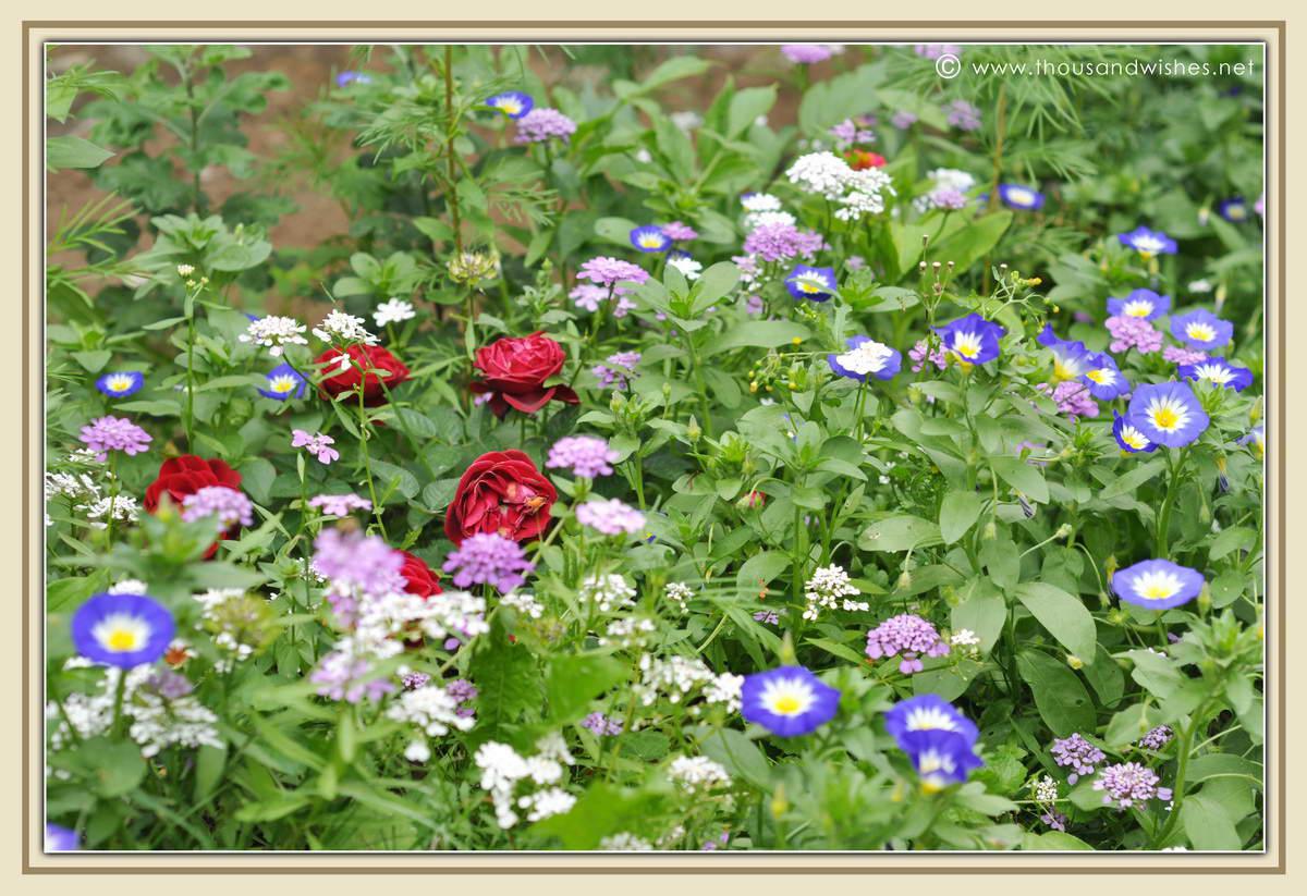 19_flowers
