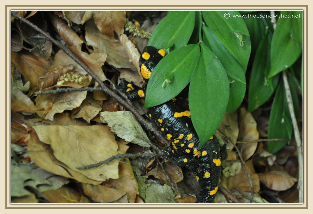 44_neras_gorges_frog