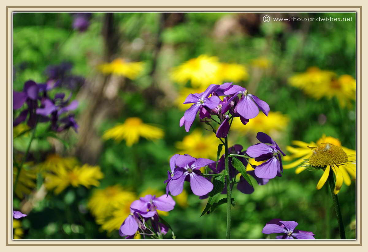 52_neras_gorges_flowers