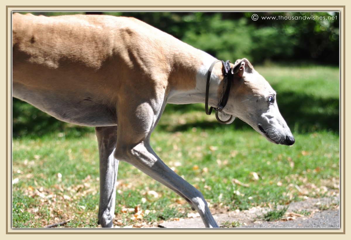 14_big_dog