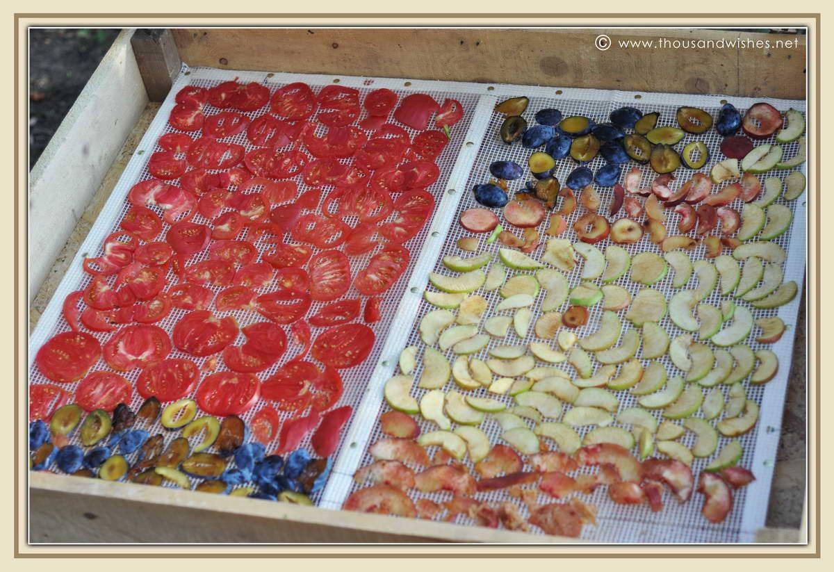 14_fruits_vegetables_diy_solar_dehydrator