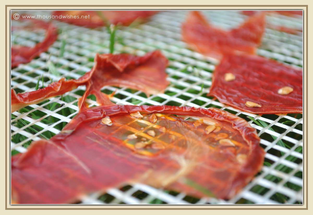 16_dried_tomatoes_diy_solar_dehydrator