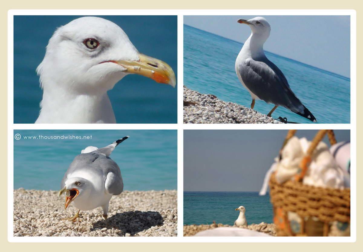 36_seagull