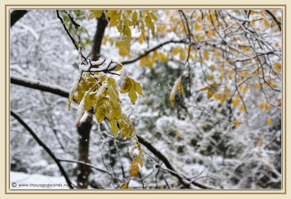 01_first_snow