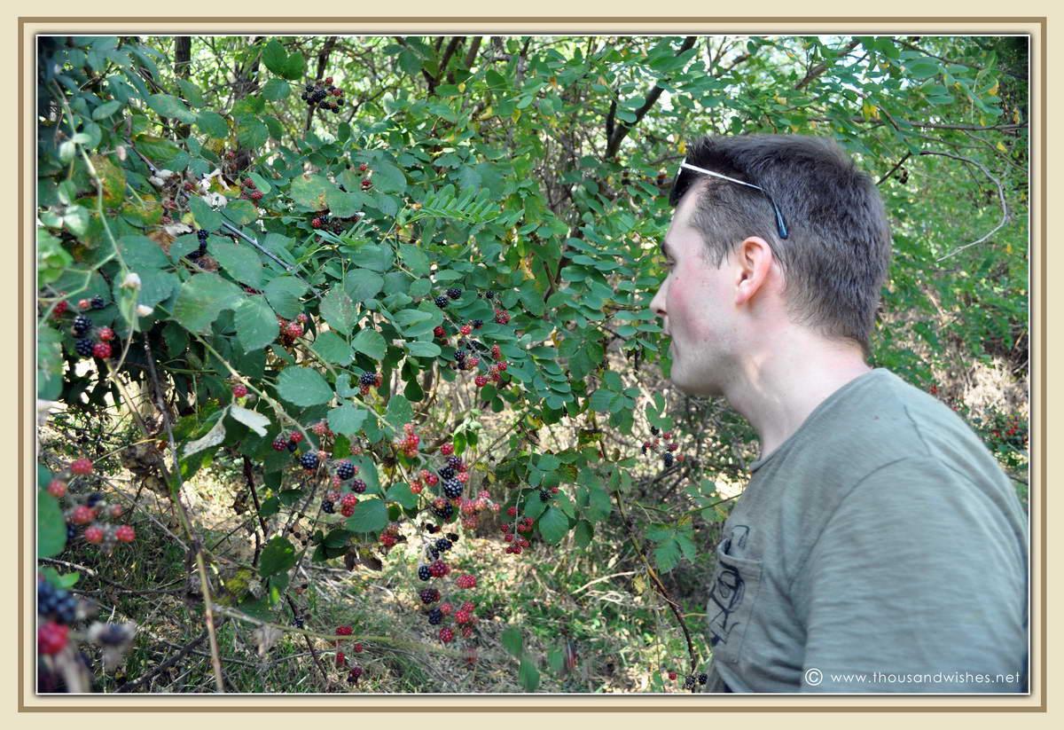 30_blackberries
