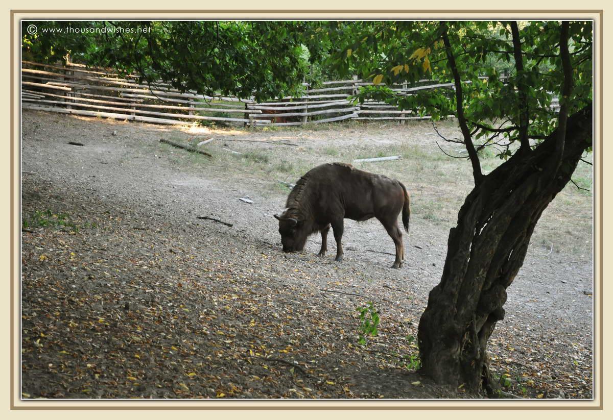 35_Slivut_Bison_Reserve