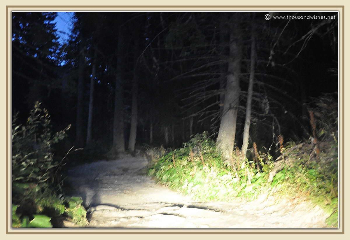 46_road_to_poiana_pelegii_retezat