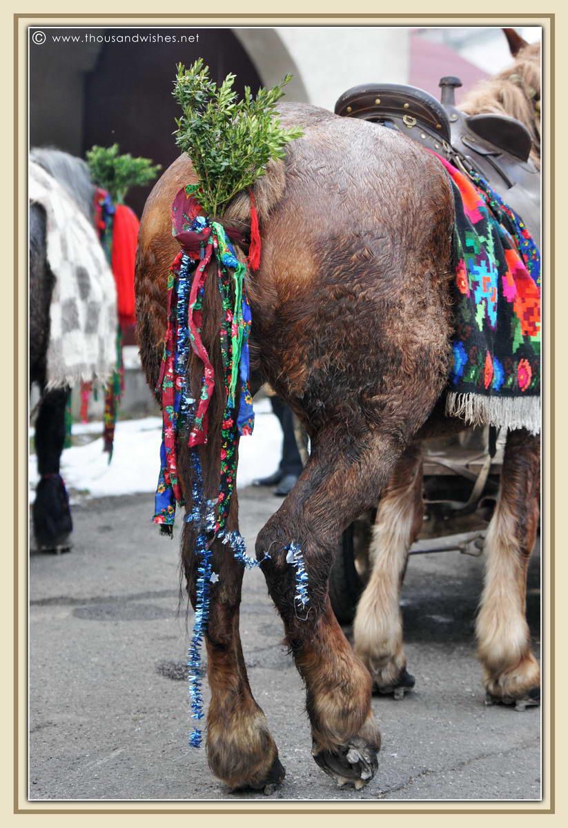 51_marmatia_festival_datini_obiceiuri_iarna