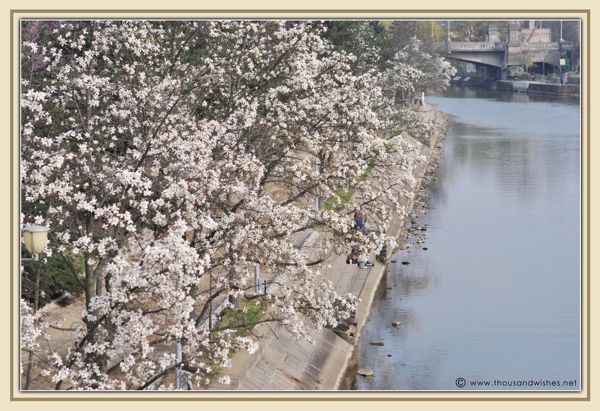 21_spring_timisoara